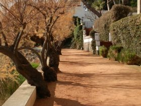 sAgaro walking path in the sun